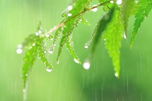 梅雨 カビ対策