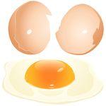 夏休みの工作は卵の殻で作る貼り絵・貯金箱・スノードームはいかが?