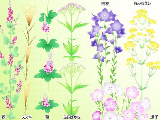 秋の七草 種類