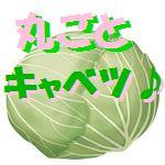 春キャベツ 丸ごと レシピ