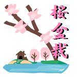 桜盆栽で初心者におすすめの人気の種類は?