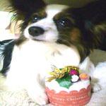 犬 クリスマスケーキ 作り方