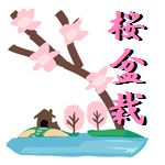 桜盆栽 初心者